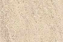 A cream-beige limestone with shell fragments.